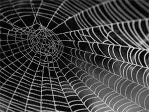 Arachnophobie – Peur des Araignées